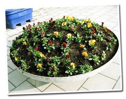 080411-blommor.jpg