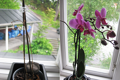 090605-orkide