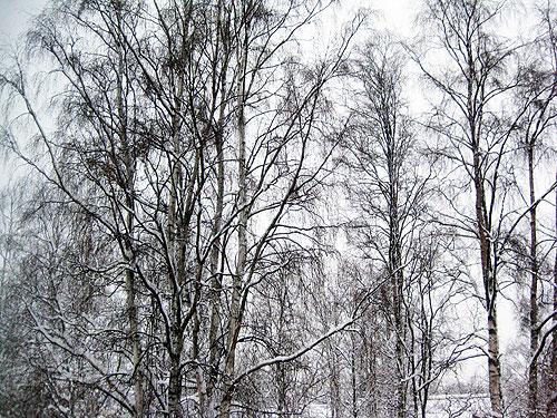 091221-snow02