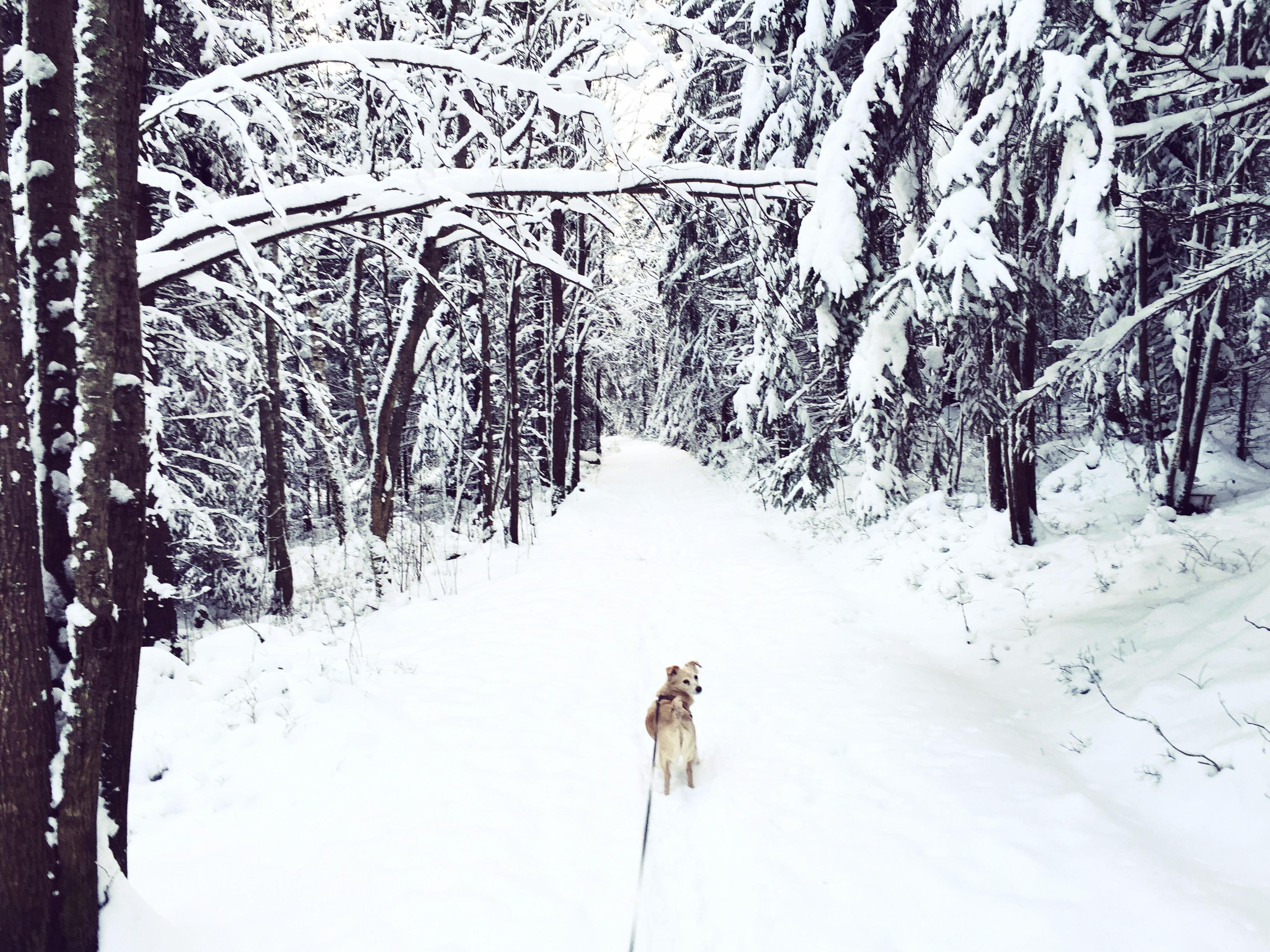 Jullov i Övik